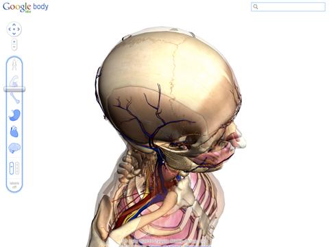 Enhanced Google Body Browser For Human Anatomy