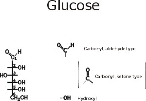Glucose Note The Functional Groups Here A Carbonyl Aldehyde Or Ketone And A Bunch Of Hydroxyls Is It Hydrophilic Or Hydrophobic